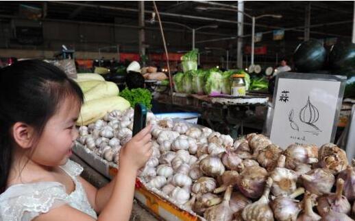 蒜种同比价格下跌近五成